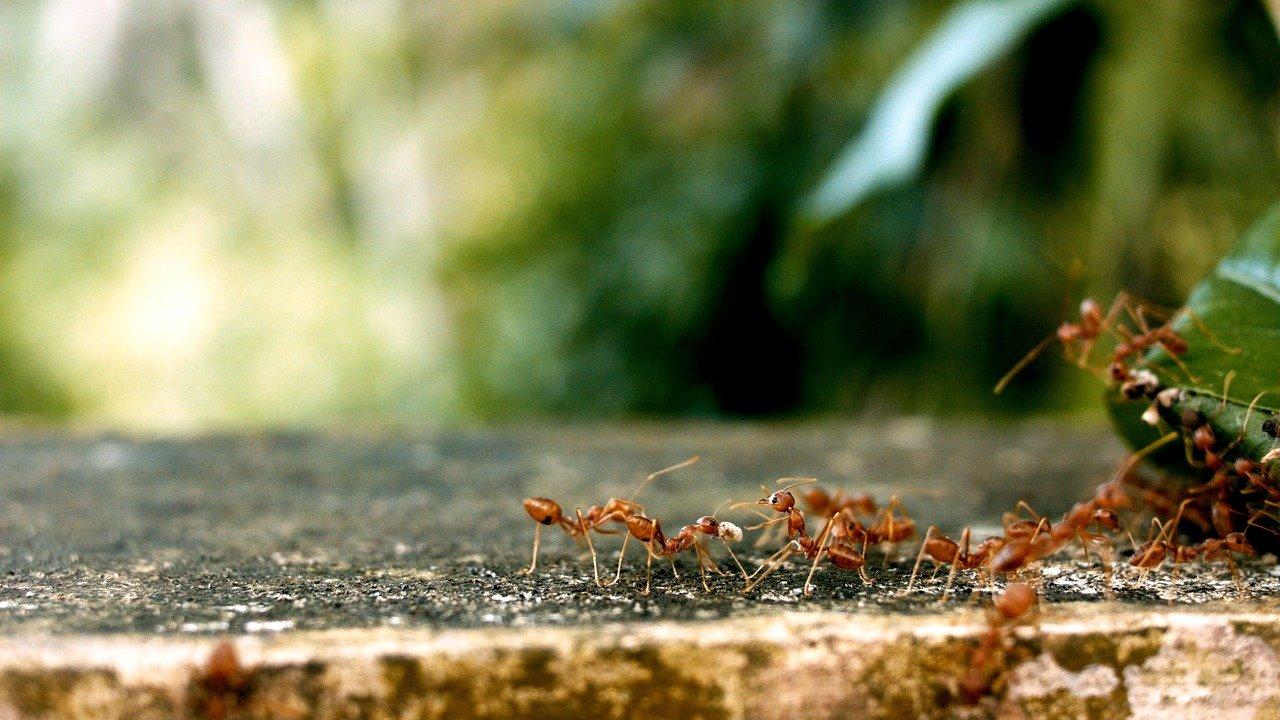 ants 2809019 1280