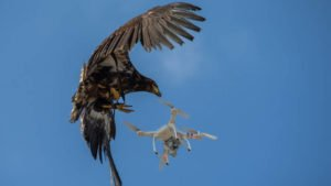 Eagle drone grab