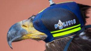 Eagle hood