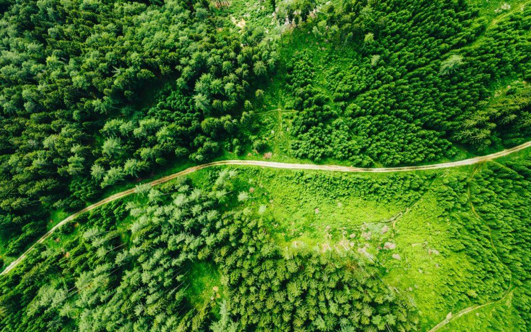 How Sustainability Will Increase Profitability